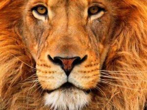 Blog: Laat de leeuw in je los